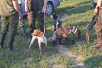 2013 г. Первенство практической охоты с подружейными собаками.
